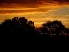 2011_11_03_sunrise_trees_large